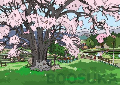 86・庄原の山桜